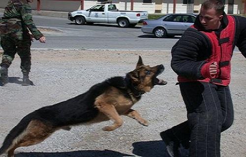 Dog Bite Attorney in Los Angeles