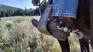 horse rider injured